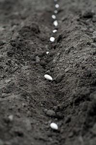 Survival Seed Pack